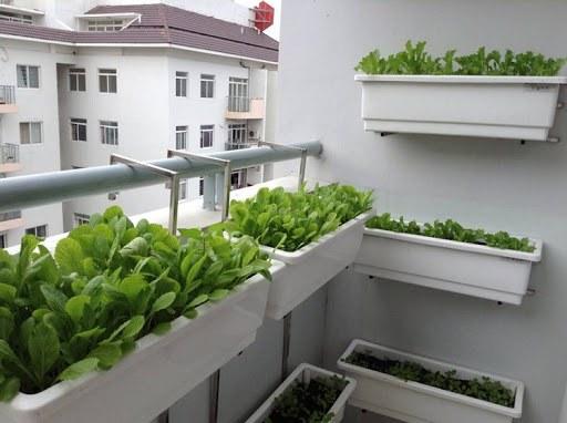 trồng rau ban công
