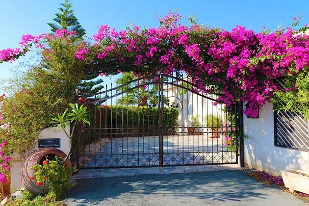 Cổng nhà đơn giản, trang nhã